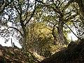 Sunken trackway to Danes Moss - geograph.org.uk - 59797.jpg