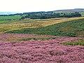 Sunny Dale, Bingley Moor - geograph.org.uk - 44693.jpg