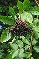 Super Fruit - geograph.org.uk - 1462710.jpg