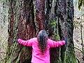 Sylvia (tree) in January 2019 02.jpg