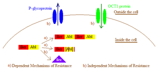 Bcr-Abl tyrosine-kinase inhibitor - Common mechanisms of resistance to TKIs