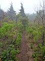 TNF100越野跑赛道 - TNF100 Ultra Trail Track - 2014.05 - panoramio (2).jpg
