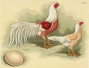 Yokohama chicken - Cock and hen, illustration from the Geflügel-Album of Jean Bungartz, 1885
