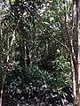 Tangkiling Nature 15.jpg