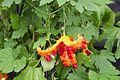 Tatton Park Flower Show 2014 037.jpg