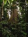 Tayap-Végétation (6).jpg