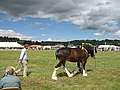 Tenbury Show, the main ring - geograph.org.uk - 909820.jpg