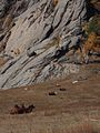 Terelj National Park, Mongolia (11441574664).jpg