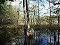 Teufelsbruch swamp next to crossing path in autumn 3.jpg
