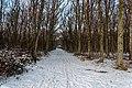 Texel - Bolgrasweg - Winterview NNW.jpg