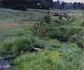 The Brook at Medfield (1889) by Dennis Miller Bunker.jpg