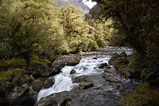 Cleddau River river in New Zealand