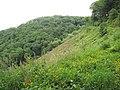 The Hobby, near Clovelly - geograph.org.uk - 1431668.jpg