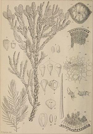 The botanical magazine = Shokubutsugaku zasshi (1907) (20401224415).jpg