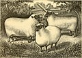 The breeds of live stock, and the principles of heredity (1887) (14594749270).jpg