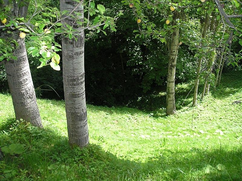 The forest near Blatets, Vinitsa.JPG