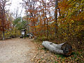 Theodore Roosevelt Island entrance clearing.jpg