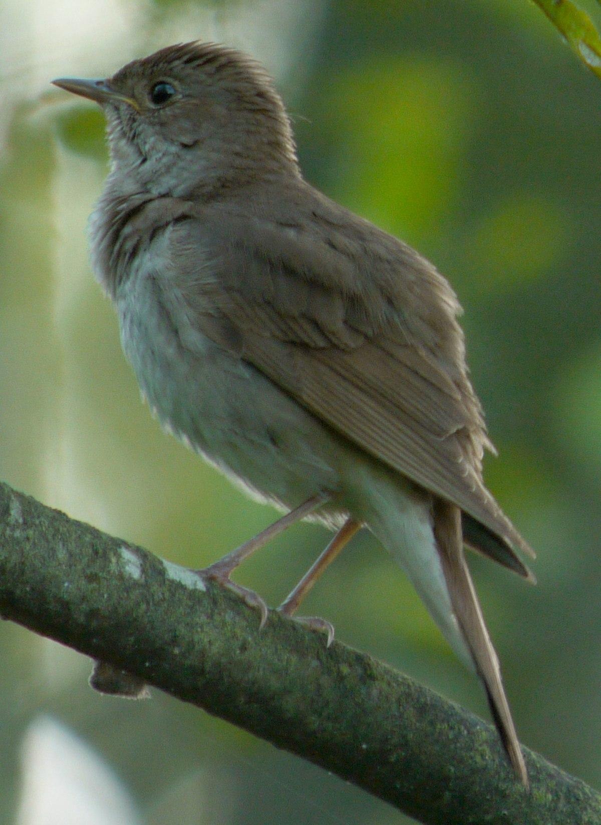 Cuibărit artificial pentru păsări. cuiburi