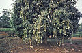 Togo-benin 1985-072 hg.jpg