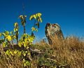 Tombstones - Jewish cemetery in Karczew, Otwock County, Masovian Voivodeship, Poland. - panoramio.jpg