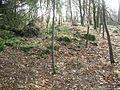 Townend of Threepwood, old ruins.JPG