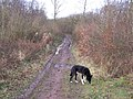 Track in Great Chattenden Wood - geograph.org.uk - 641996.jpg