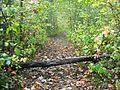 Trail - panoramio (5).jpg