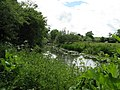 Tranquil River Arun alongside footpath to Rowner Bridge north of Rowner Farm - geograph.org.uk - 1358113.jpg