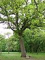 Tree-8748.jpg