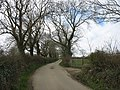 Tree-lined road leading into Capel Parc - geograph.org.uk - 1230092.jpg