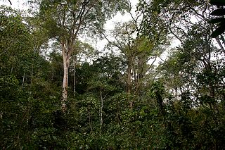 Moribane Forest Reserve rain forest in central Mozambique