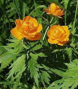 Цветы википедия