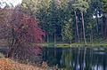 Trostianetsky park 03.JPG