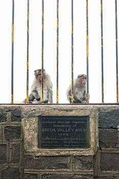 Two Monkeys at Green Valley View.jpg