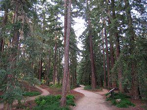 University of California, Davis Arboretum - Redwood grove