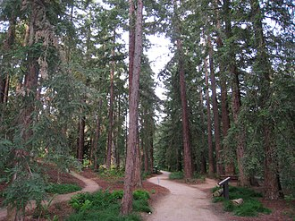 University of California, Davis Arboretum - Redwood grove