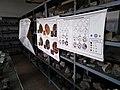 UNMSM Museo de Mineralogía - Interior de Gabinete de Mineralogía.jpg