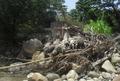 Un tronco seco.PNG