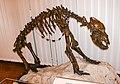 Ursus spelaeus skeleton in the National Museum of Slovenia.jpg