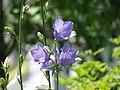 Vara in Gradina Botanica Cluj-Napoca (532264143).jpg