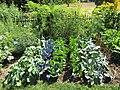 Vegetables (28769580666).jpg