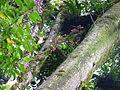 Vegetación de la Reserva de la Biosfera La Amistad Panama (RBLAP) 42.JPG