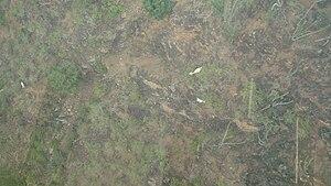 Chicamocha Canyon - Image: Vegetacionfaunachica mocha