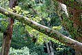 Vegetation - Geku, Ise Shrine - Ise, Mie, Japan - DSC07810.jpg