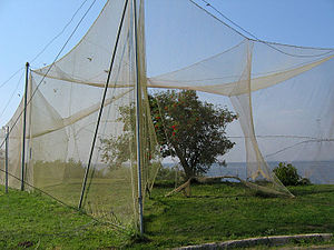 Ventė Cape - Nets in the bird ringing station.