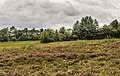 Verruigd biotoop. Locatie, Stuttebosch in de lendevallei. 27-08-2020. (actm.) 03.jpg