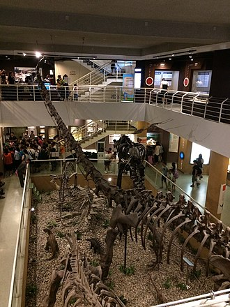 Paleozoological Museum of China - The first floor viewed from the second floor.