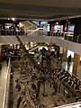 View of first floor of Paleozoological Museum of China from second floor.jpg