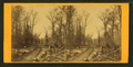 View of road through the woods, by Upton, B. F. (Benjamin Franklin), 1818 or 1824-after 1901.png