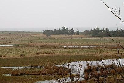 Vogelreservat Wallnau Feuchtgebiet.jpg